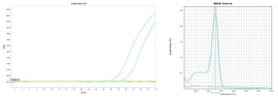 Amplification plot and melt curve for S. aureus in spinach with IMS.