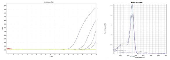 Amplification plot and melt curve for S. aureus in sprout with IMS.