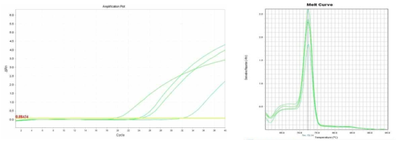 Amplification plot and melt curve for S. aureus in spinach after enrichment.
