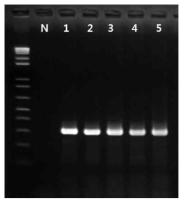 Bacillus cereus 프라이머의 inclusivity test