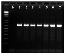 Salmonella spp. 프라이머의 inclusivity test