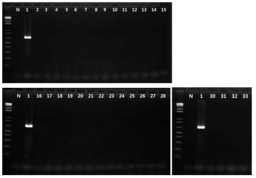 Salmonella spp. 프라이머의 exclusivity test