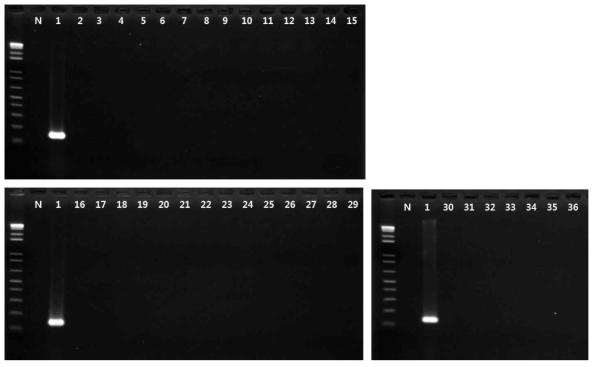 Shigella spp. 프라이머의 exclusivity test