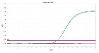 Listeria monocytogenes의 amplification plot 확인