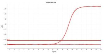 Staphylococcus aureus의 amplification plot 확인