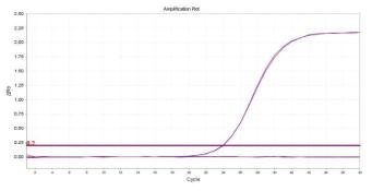 Bacillus cereus의 amplification plot 확인