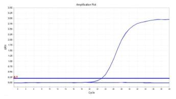 Salmonella spp.의 amplification plot 확인