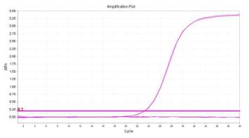 EHEC verotoxin1(VT1)의 amplification plot 확인