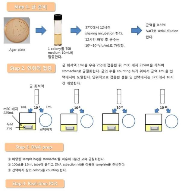 식품에 배양한 생균의 양과 Real-time PCR 결과의 상관관계 실험 과정