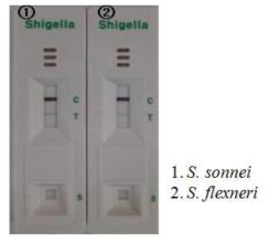 Shigella kit의 민감도 테스트