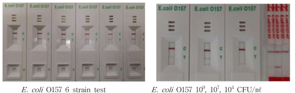 E. coli O157 kit의 민감도 테스트