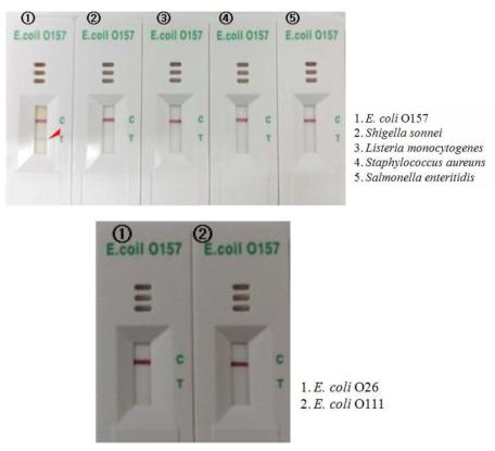 E. coli O157 kit의 특이도 테스트
