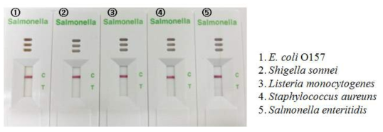 Salmonella kit의 특이도 테스트