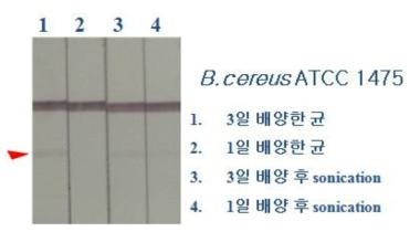 Bacillus cereus kit의 테스트