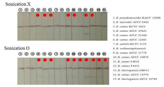 Bacillus cereus 균주들의 sonication 전/후의 비교 감도 테스트