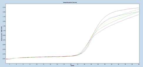 PCR amplification curves with Filter FAM 465-510 for B.cereus
