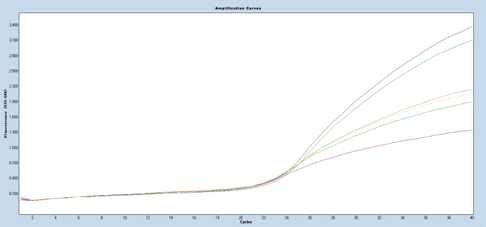 PCR amplification curves with Filter VIC 533-580 for L.monocytogenes