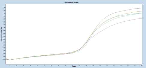PCR amplification curves with Filter Cy5 618-660 for S.aureus
