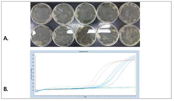 AOAC 검증 방법으로 수행한 PCR 키트의 성능 검증 결과.