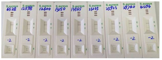황색포도상구균 검출용 면역 키트의 inclusivity/exclusivity 검증.
