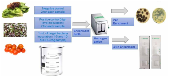 Diagram in the validation protocol based on AOAC method for developed kits