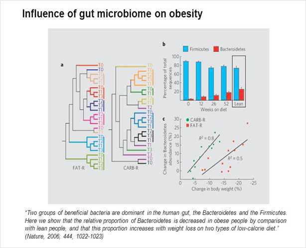 정상인과 비만인의 장내 미생물 연구를 통해, 비만을 결정하는 요인으로 새롭게 밝혀진 장내 미생물 (gut microbiota)