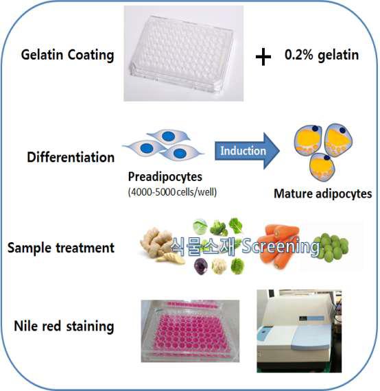 항비만 농산물소재 초고속 탐색을 위한 in vitro HTS