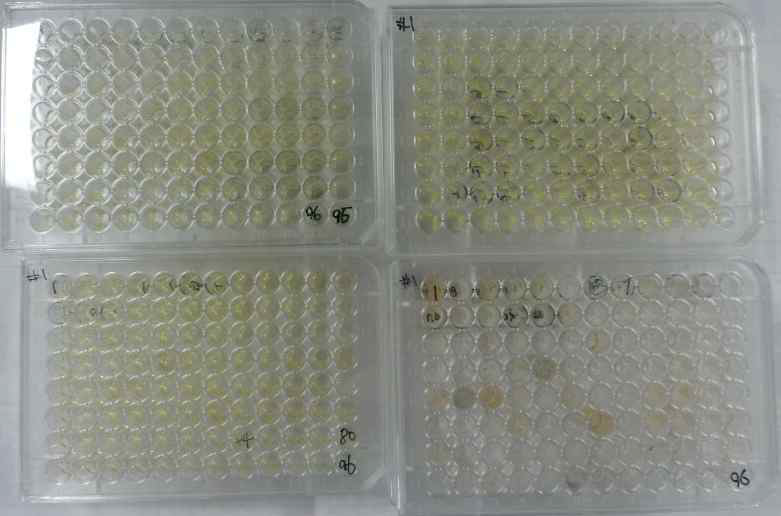 pancreatic lipase 비활성화 실험 사진