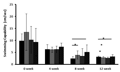 The effects of Tangerine and CA on physical strength over the period of 12 weeks showing the performance of mice in the swimming test.