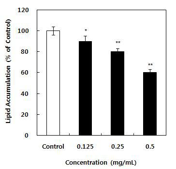 항비만 유산균 첨가 발효유 에탄올 추출물의 지방축적 억제효과