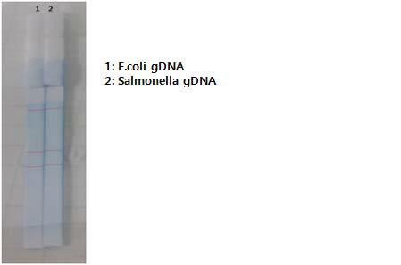 타 PCR enzyme 제품을 이용한 식중독균 검출 결과