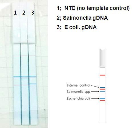 PCR 장비 변화에 따 른 최적화 실험 결과