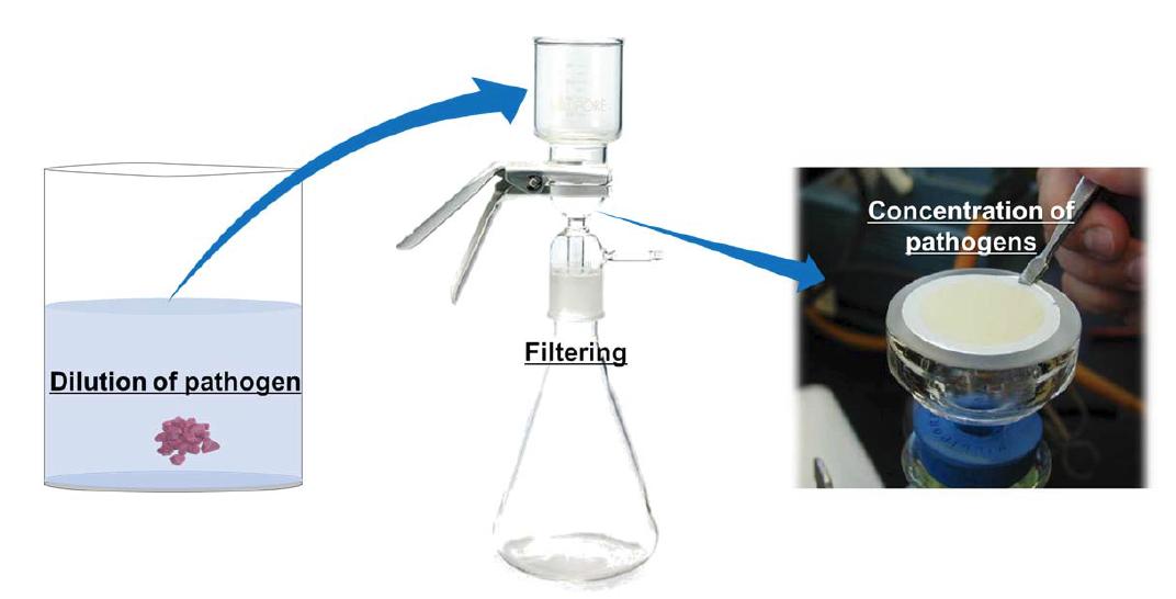 Filtering을 이용한 식중독균 농축