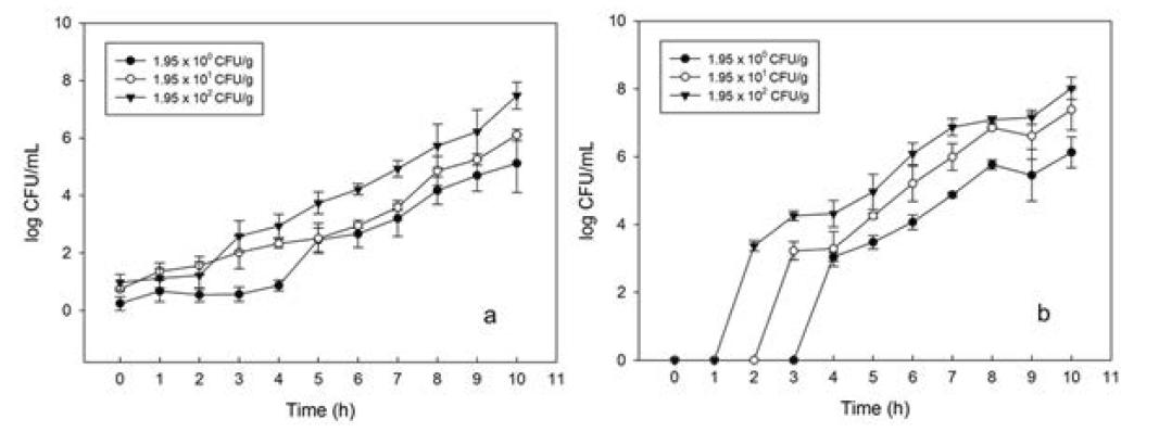 Membrane filter에 농축된 S. Typhimurium의 enrichment 배양에 따른 성장.