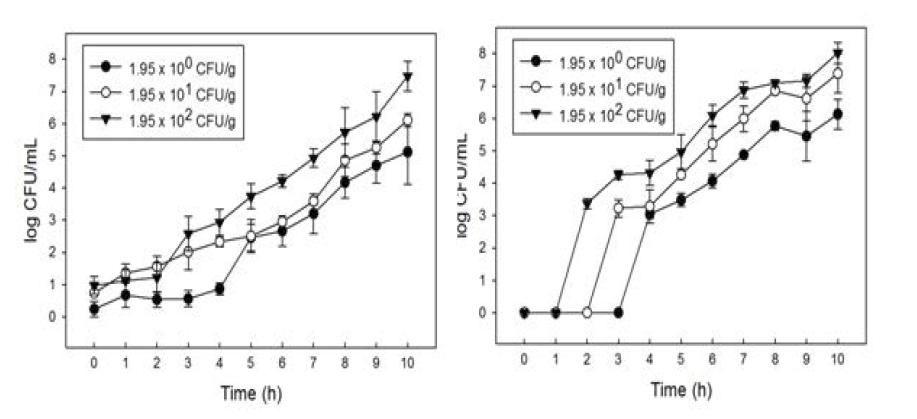 양상추 내 오염 S. Typhimurium의 filtering 농축 후 membrane filter에 농축된 S. Typhimurium의 enrichment 배양 간 성장.