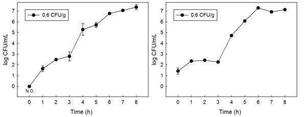 쇠고기 내 오염 B. cereus의 filtering 농축 후 membrane filter에 농축된 B. cereus의 enrichment 배양 간 성장.