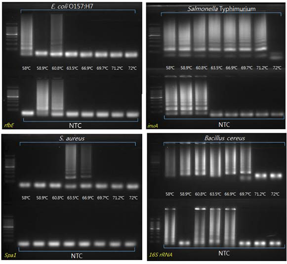 식중독균 DNA의 온도에 따른 LAMP 증폭과 결과산물의 전기영동