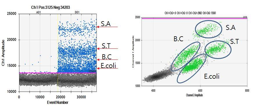 Digital PCR (QX 200)을 이용한 Staphylococcus, Salmonella, E. coli 와 Bacillus multiplex test 실험.