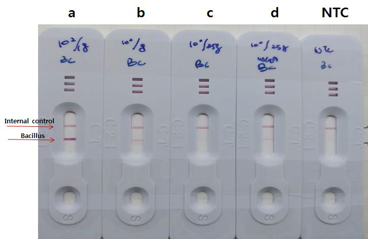 Bacillus 균의 lateral flow assay (LFA)결과.