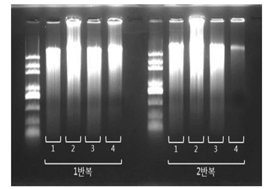 실험 방법 별 WGA를 이용한 DNA 증폭 효율 양상 확인