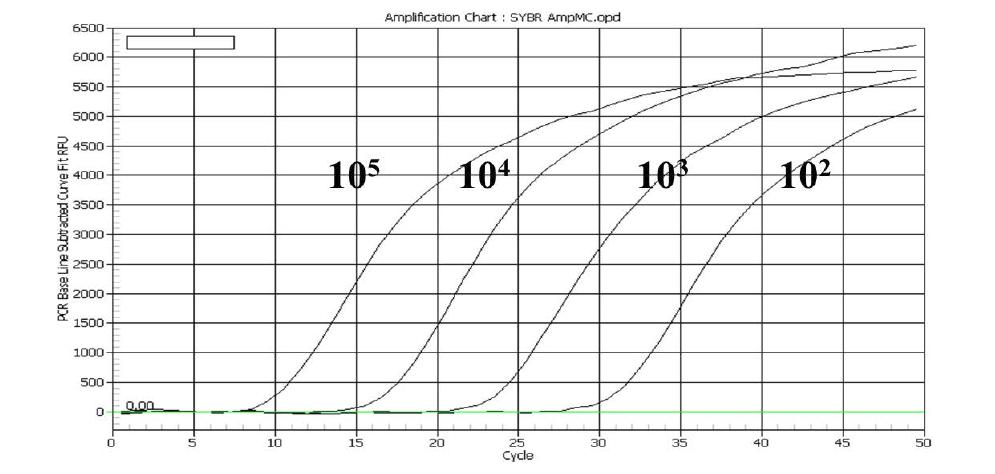 각각 다른 양의 standard plasmid가 만들어내는 PCR 증폭 그래프