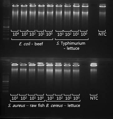식품에 존재하는 식중독균의 DNA를 WGA를 이용 하여 증폭시킨 후 전기영동을 통하여 확인