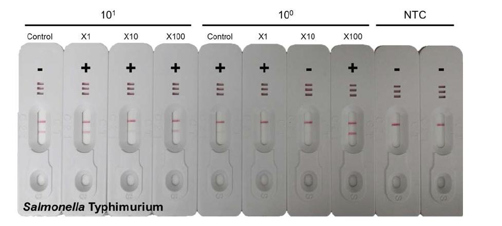 S. Typhimurium의 Filtration 후의 증폭 효율 비교