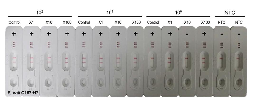 E. coli O157:H7의 Filtration 후의 증폭 효율 비교