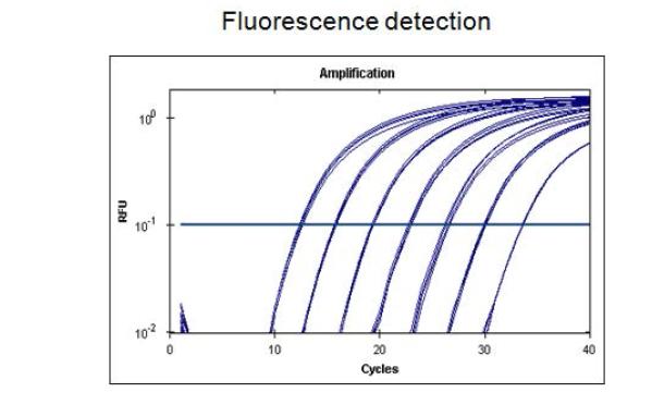 정량분석 PCR