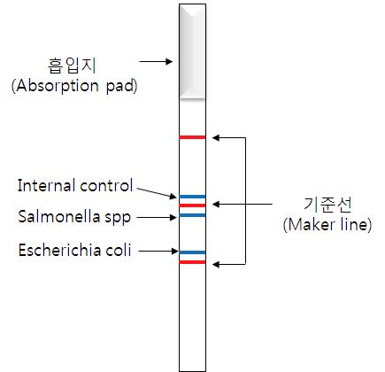 Chromato strip 구성