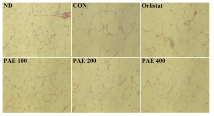 Effect of PAE for 6 weeks on white adipose tissue in C57BL/6J mice fed high-fat diet.