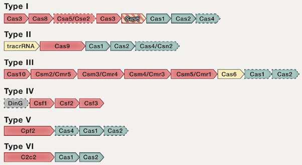 현재 CRISPR 시스템의 분류