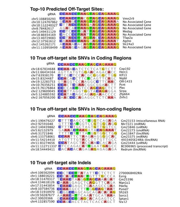 guide RNA와 비특이적 변이가 발생된 지점의 염기서열 비교