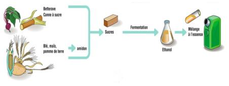바이오 휘발유 생산과 이용